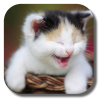 Funny Cat Live Wallpaper_icon