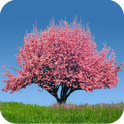Spring Trees L W