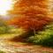 Autumn Tree LW
