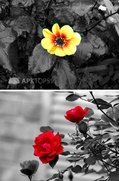 Color Splash Effect Pro 1.5.2 (2)