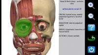 Visual Anatomy 4.1 Proper  (3)