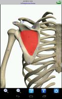 Visual Anatomy 4.1 Proper  (4)