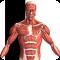 Visual Anatomy 4.1 Proper
