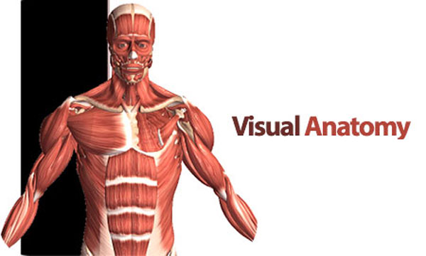 Visual Anatomy 4.1 Proper