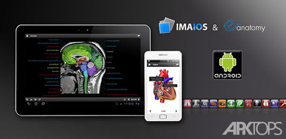 IMAIOS-e-Anatomy
