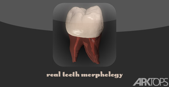 Real-Tooth-Morphology