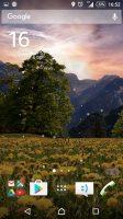 mountain-dandelions-2