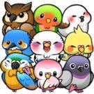 Bird Life v1.6.7 دانلود بازی جذاب زندگی پرندگان