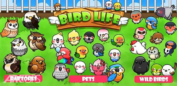 Bird Life دانلود بازی زندگی پرندگان