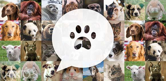 My Talking Pet دانلود برنامه حیوان خانگی سخنگوی من