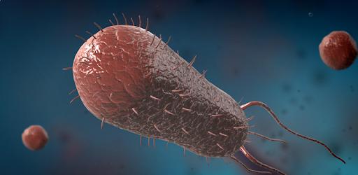 Bacteria interactive educational VR 3D